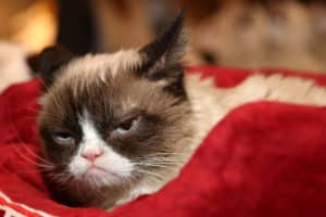 Nothing to Smile About: The Grumpy Cat Lawsuit